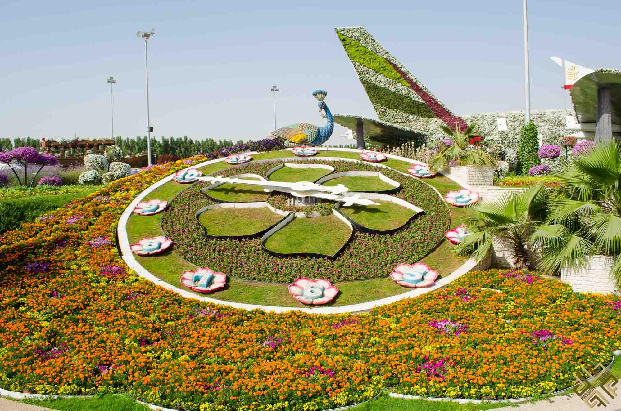 Dubai Miracle Garden: A flower paradise - Passion for Dubai