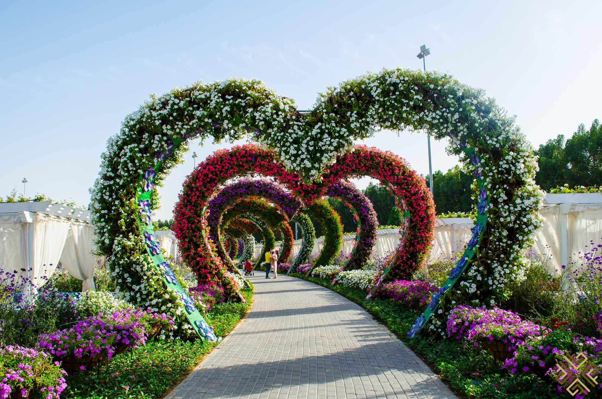 dubai miracle garden a flower paradise passion for dubai